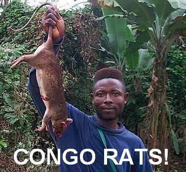 Congo_Rats.JPG